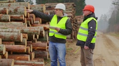 Forest Officers inspect piles of logs - stock footage