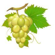 White grape Stock Illustration