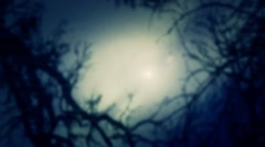 Looking at the Moon and Creepy Sky Through Dead trees Stock Footage
