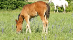 Foal pasture on the green meadow Stock Footage