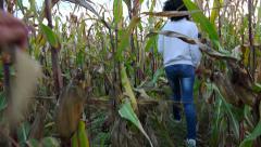 Female walk in corn farm field. sony 4k steadycam shoot. Stock Footage