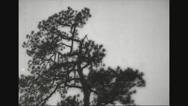 Two lumberjacks felling tree Stock Footage