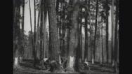 Group of lumberjacks felling trees Stock Footage
