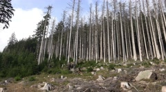 4k Bark beetle dying forest panning mountain range Harz Stock Footage
