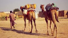 Caravan of camels arrives at a small village in the Thar Desert Stock Footage