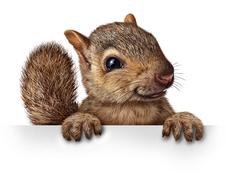 cute squirrel - stock illustration