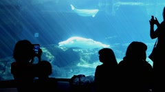Silhouette of people watching and recording beluga at the vancouver aquarium. Stock Footage
