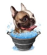 Dog bath Stock Illustration