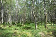Tussock covered with moss and grass in forest. - stock photo