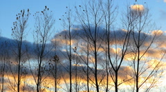 Barren Autumn Trees Swaying in Front of Dramatic Dusk Sky Stock Footage