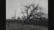 View of fallen trees in field Stock Footage