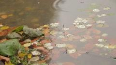 Leaf Fallen On Water Stock Footage