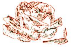 star rose decorative background - stock illustration