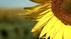 Organic Food Clean Energy Concept Planet Earth Environment Sunflowers Rack focus Stock Footage