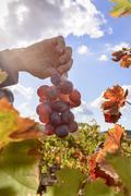 Sunlit colored vineyard Stock Photos