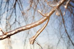bare tree branches with ice - stock photo