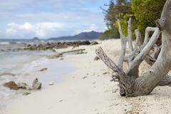 tropical beach in Carribean - stock photo