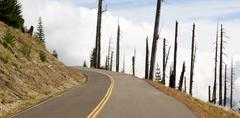 open road damaged landscape blast zone mt st helens volcano - stock photo