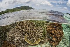 Shallow Coral Reef - stock photo
