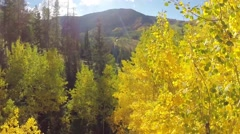Aerial Fall Aspens and Mountains Stock Footage