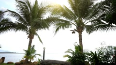 Palm trees at the shore on a background of sunlight. Koh Samui, THailand. HD. Stock Footage