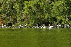 Group animals - pelicans and cormoran - stock photo