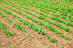 Vegetable cultivation Stock Photos