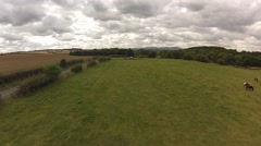 Aerial view of the countryside and horses Stock Footage