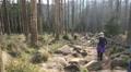 Rocky path climbing to Brocken mountain range Harz HD Footage
