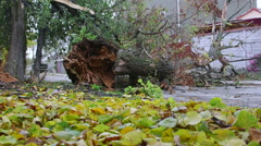 Fallen tree trunk damaged by wind storm on the road Stock Footage