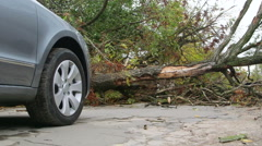 Road obstructed by fallen tree Stock Footage