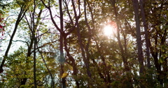 Sunlight shining through forest trees 4k Stock Footage