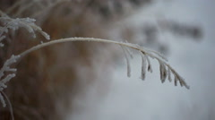 Frost Covered Grass - stock footage