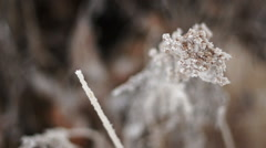 Frost Covered Plant - stock footage