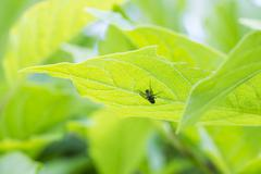 Insect on vivid green leaf Stock Photos