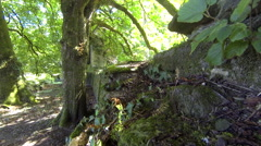 Ancient ruins in the forest Stock Footage