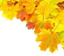 Autumn maple leaves Kuvituskuvat