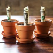 us dollars planting in flower pots - stock photo