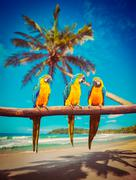 Parrots Blue-and-Yellow Macaw on beach Stock Photos
