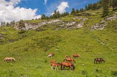 Horse foals grazing mountains Stock Photos