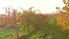 Stock Video Footage of Crimean valley vineyards in fall on a sunny day near Inkerman
