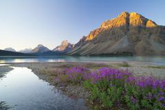 bow lake at sunrise, banff national park, unesco world heritage site, alberta - stock photo