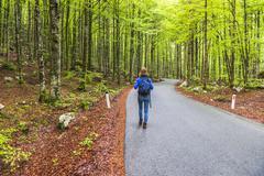 lake bohinj, tourist walking in a pine forest, triglav national park, julian  - stock photo