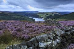 Heather covered bamford moor, ladybower reservoir and ashopton bridge at dawn Stock Photos