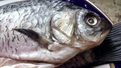 Purified fresh fish - stock footage