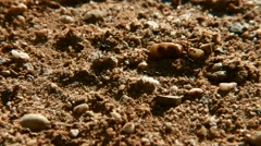 Working Collaboration Concept Ants Running Field Soil Carrying Stock Footage