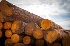 Timber or lumber Stock Photos