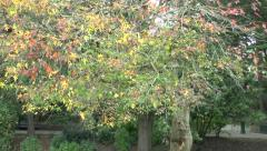 Autumn Fall Tree Colors Stock Footage