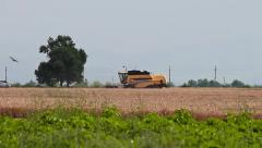 Wheat harvesting Machine Stock Footage