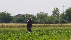 Man working on corn field in summer heat Stock Footage